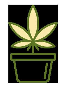 ilustração de uma planta de cannabis utilizado para área médica